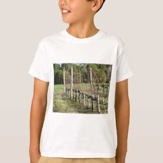 Bare vineyard field in winter . Tuscany, Italy T-Shirt
