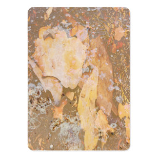 Bark in water close up texture business cards