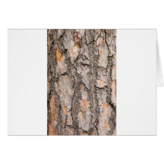 Bark of Scotch pine tree as background Card