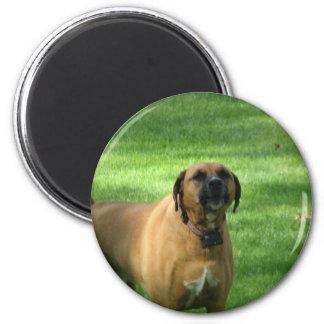 Barking Boxer Dog Magnet Refrigerator Magnet