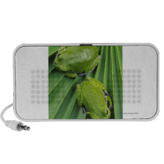 Barking Tree Frog (hyla gratiosa) Mp3 Speaker