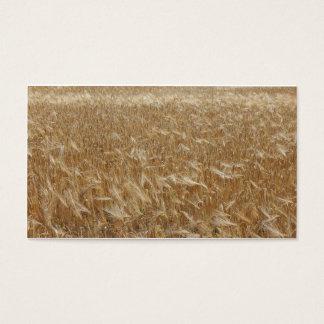 barley [Hordeum vulgare] Business Card