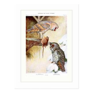 Barn and Long-eared Owls Postcard