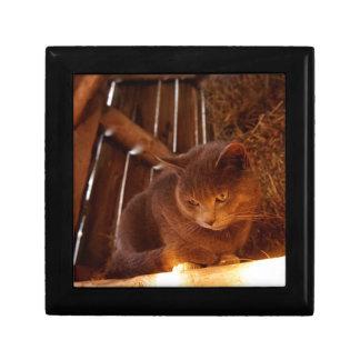 Barn Cat Gift Box
