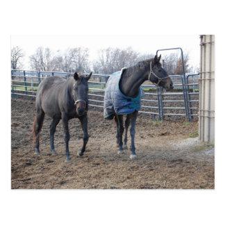 Barn Farm Horse Buddies Postcard