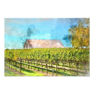 Barn in a Vineyard in Napa Valley California Photo Print