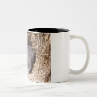 Barn kitty Two-Tone coffee mug