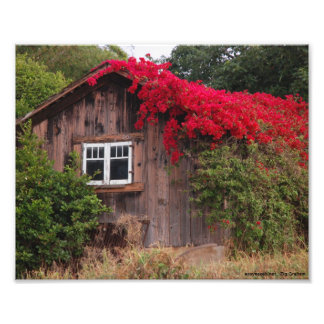 Barn of color photo print