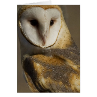 Barn Owl 3 Greeting Card