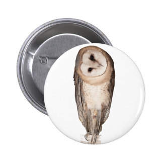 Barn owl 6 cm round badge