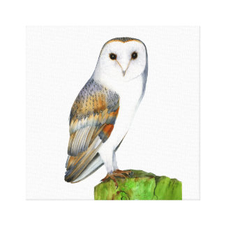 Barn Owl Bird Watercolour Painting Artwork Canvas Canvas Print