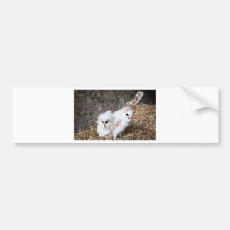 Barn Owl Chicks In A Nest Bumper Sticker