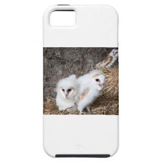 Barn Owl Chicks In A Nest Case For The iPhone 5