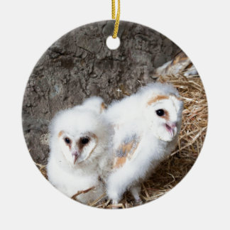 Barn Owl Chicks In A Nest Ceramic Ornament