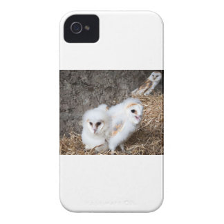 Barn Owl Chicks In A Nest iPhone 4 Case