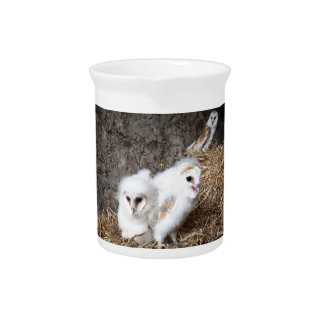 Barn Owl Chicks In A Nest Pitcher