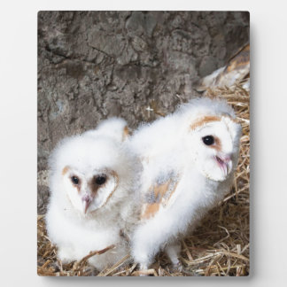 Barn Owl Chicks In A Nest Plaque