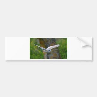 Barn Owl Flying Bumper Sticker