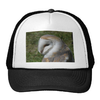 Barn owl hat