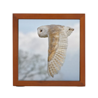 Barn Owl in Flight Desk Organizer