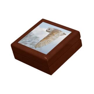 Barn Owl in Flight Gift Box