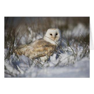 Barn Owl in Snow Greeting Card