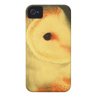 Barn owl iPhone 4 cover