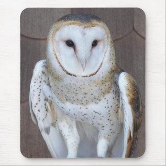 Barn Owl Photo Mouse Pad
