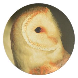 Barn owl plates