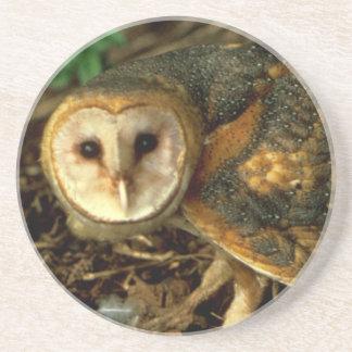 Barn Owl Sandstone Coaster