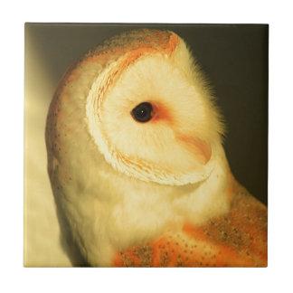 Barn owl small square tile