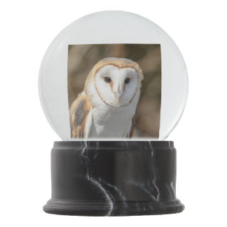Barn Owl Snow Globe