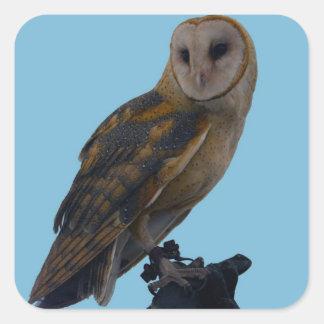 Barn Owl Square Sticker