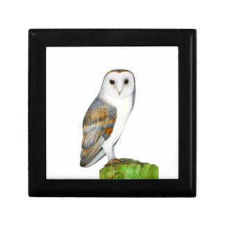 Barn Owl Tyto Alba Watercolor Artwork Print Gift Box