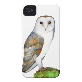 Barn Owl Tyto Alba Watercolor Artwork Print iPhone 4 Case-Mate Cases