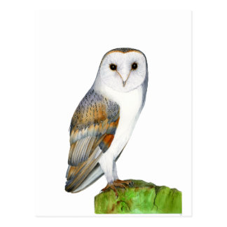 Barn Owl Tyto Alba Watercolor Artwork Print Postcard