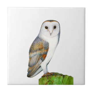 Barn Owl Tyto Alba Watercolor Painting Artwork Tile