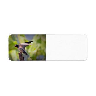 Barn Swallow Address Labels