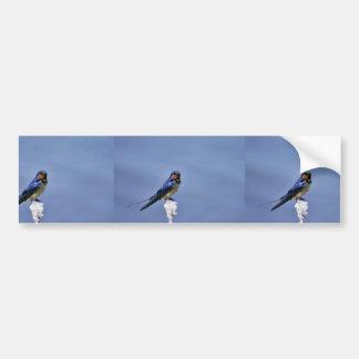 Barn swallow bumper sticker