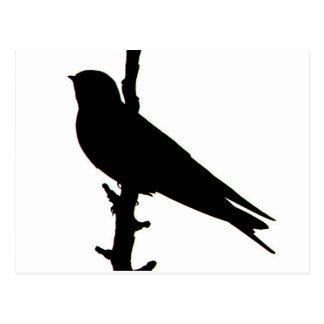Barn Swallow silhouette Postcard