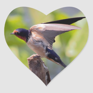 Barn Swallow Stickers