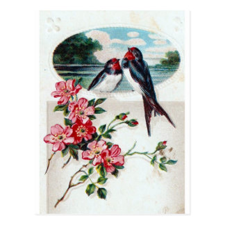 Barn Swallows and Pink Flowers Postcard