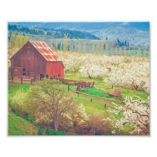 Barn With Cherry Blossoms - Season of Blooms Photograph