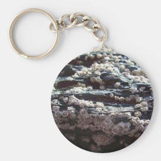 Barnacles 2 key ring