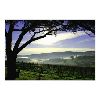 Barossa Valley Landscape Photo Print