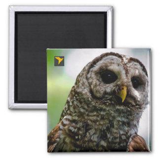 """Barred Owl 2"""" Magnet"""