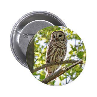 Barred Owl 6 Cm Round Badge