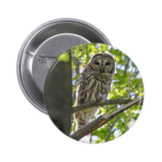 Barred Owl Button