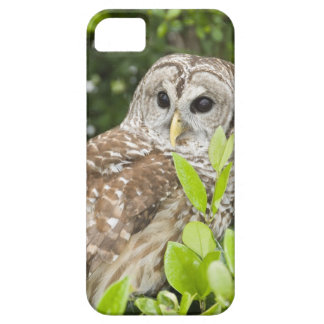 Barred Owl Barely There iPhone 5 Case