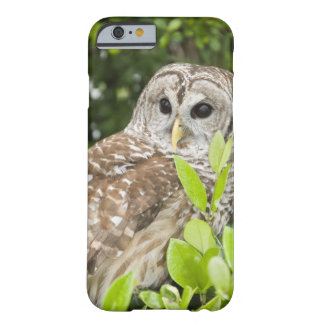 Barred Owl Barely There iPhone 6 Case